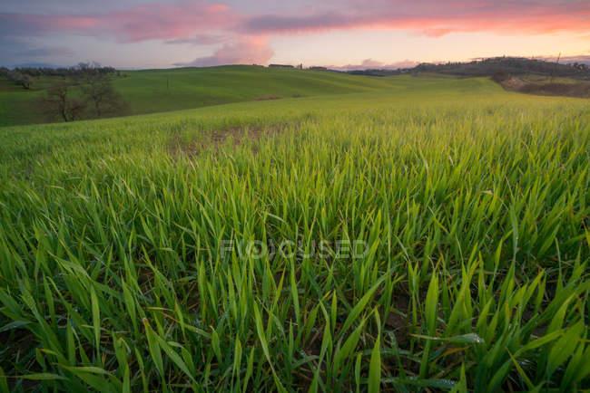 Vista panorâmica de infinitos campos verdes sob luz solar brilhante ao pôr do sol, Itália — Fotografia de Stock