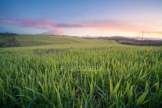 Panoramic view of endless green fields in bright sunlight at sunset, Italy — Stock Photo