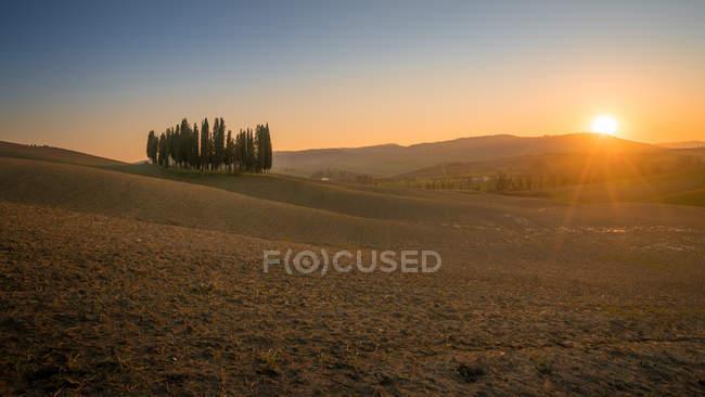 Bosque de ciprestes em campo vazio remoto ao pôr-do-sol, Itália — Fotografia de Stock