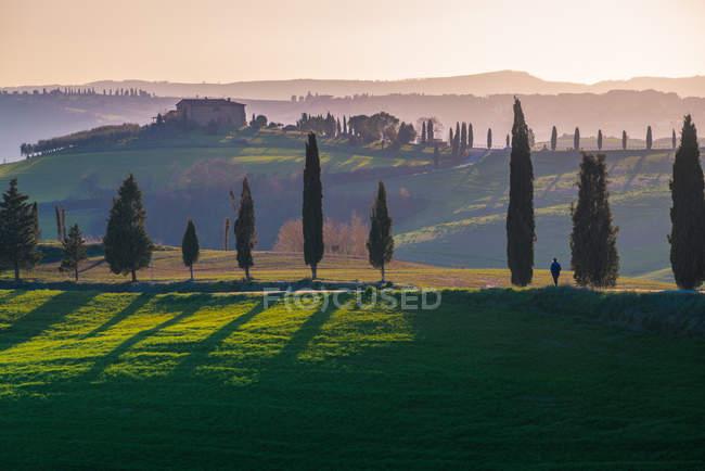 Vista panoramica di infiniti campi verdi con cipressi alla luce del sole, Italia — Foto stock