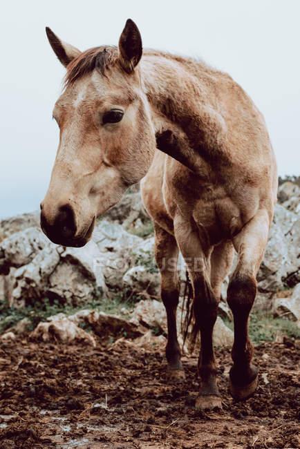 Лошади пасутся на поле с сухой травой около гор — стоковое фото