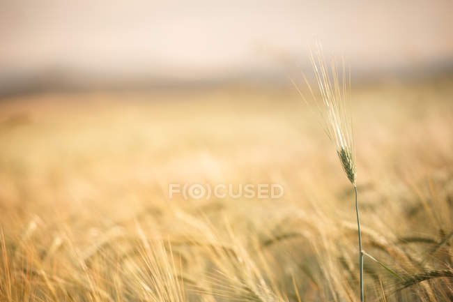 Close-up of single gentle twig in grassland — Stock Photo
