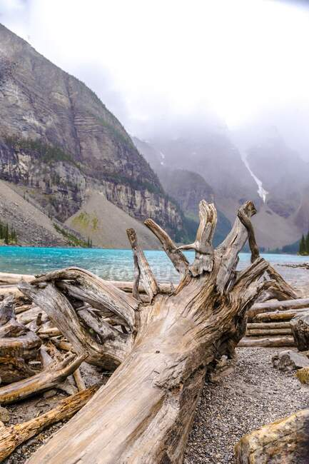 Picturesque view of wooden trunks on coast near water surface and tops of stone hills in clouds in Banff, Canada — Stock Photo