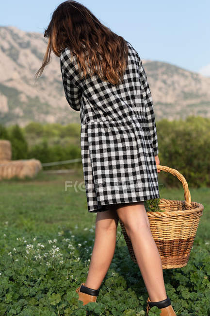 Back view of anonymous female teenager walking in field and holding basket with green herbs — стокове фото