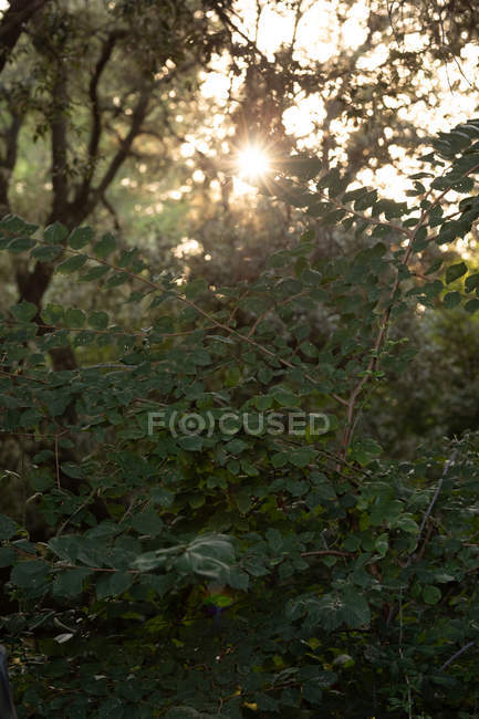 Sunlight shining through beautiful deciduous green forest — Stock Photo