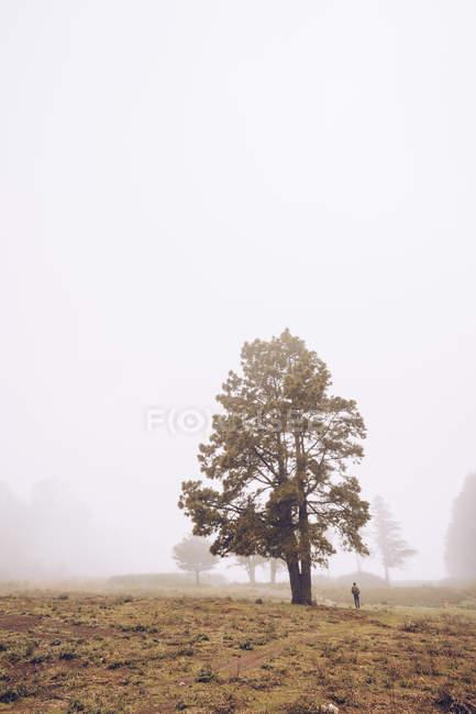 Hiker walking on foggy rural field — Stock Photo