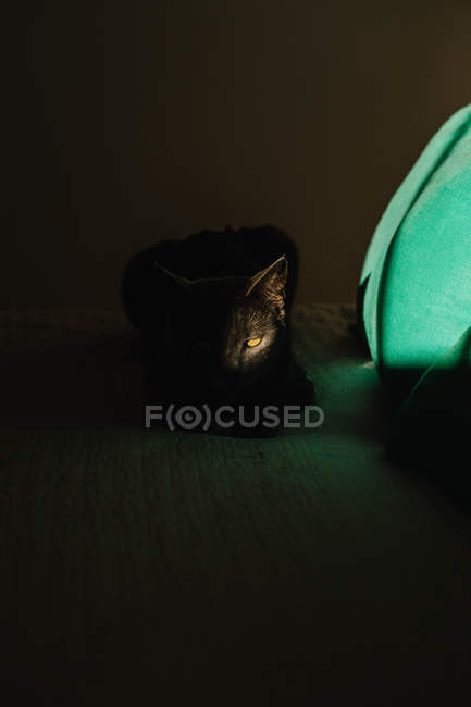 Cute cat curled up on bed under ray of light in dark bedroom — Stock Photo