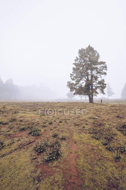 Randonneur marchant sur un terrain rural brumeux — Photo de stock