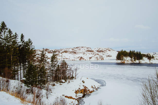 Brook in beautiful snowy forest — Stock Photo