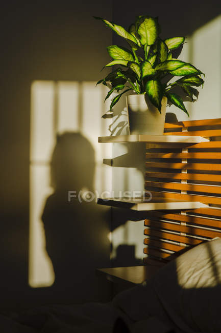 Shadow of anonymous woman projected on wall next to plant in bedroom — Stock Photo