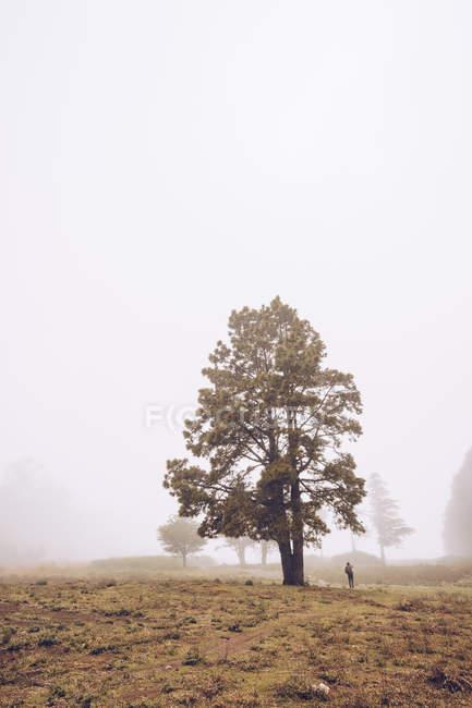 Caminante caminando en el campo rural brumoso - foto de stock