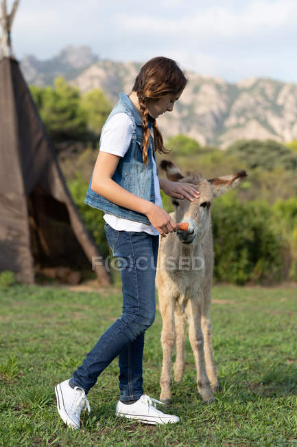 Side view of young woman stroking and feeding carrot for donkey in field — стокове фото