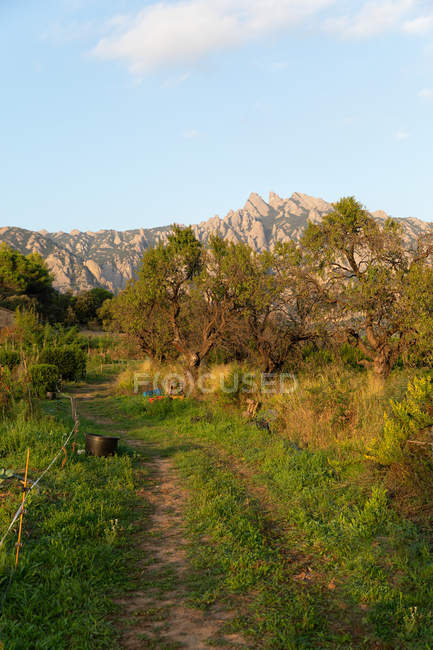 Landscape of rural with beautiful trees and bushes in field near mountains — Stock Photo