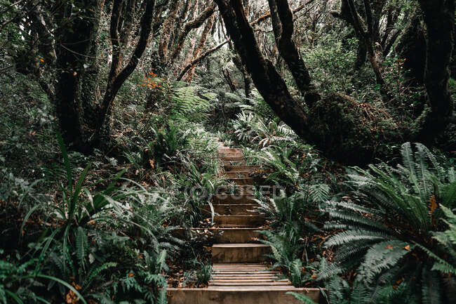 Wooden stairs in green tropical forest in Taranaki, New Zealand — стоковое фото