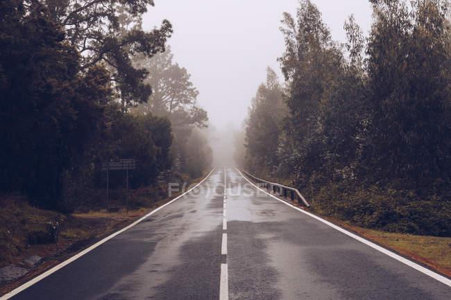 Порожня дорога через ліс в похмурий день — стокове фото