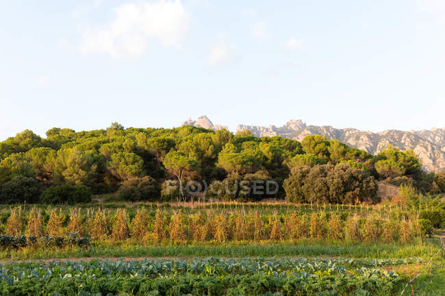 Landscape of rural agriculture garden and farmland — Stock Photo