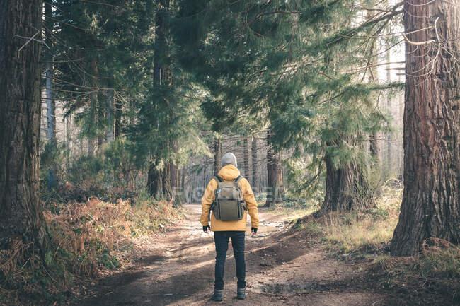 Неузнаваемый путешественник в хвойных лесах — стоковое фото