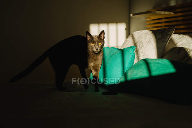 Cute cat standing on bed under ray of light in dark bedroom — Stock Photo