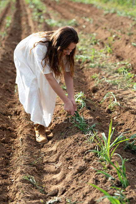 Teen girl harvesting near sprouts on agricultural field in orchard in Catalonia, Spain — стокове фото