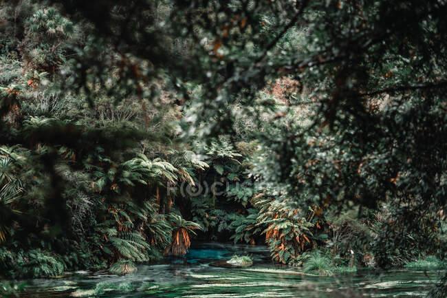 Plantes tropicales près d'une rivière rapide — Photo de stock