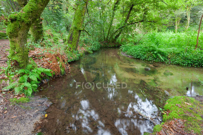 Stream in forest ferns humid vegetation in Galicia, Spain — Fotografia de Stock