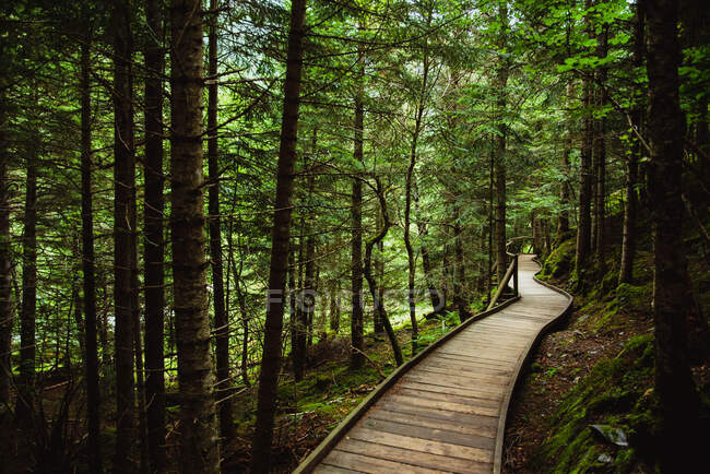 Narrow lumber path going through tranquil green forest on sunny day in countryside — Stock Photo