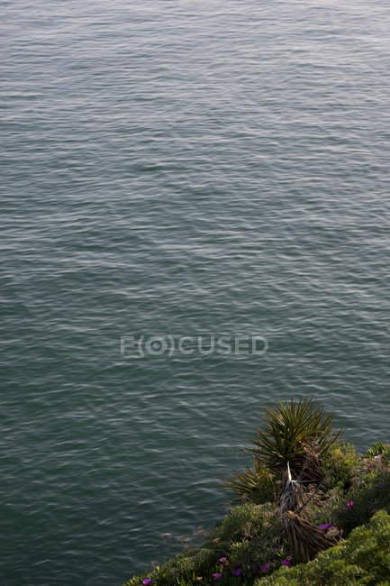 Спокійна пульсація морської поверхні і зелена рослинність на узбережжі — стокове фото
