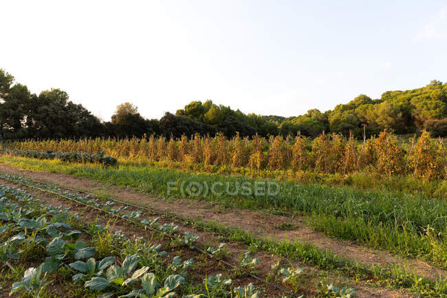 Landscape of rural agriculture garden and woods in farmland — Stock Photo