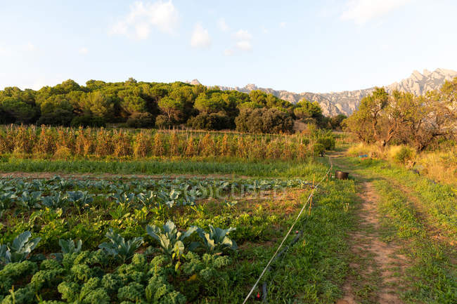 Landscape of rural agriculture garden and dirt road in countryside — Stock Photo