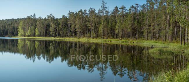 Paisagem ensolarada de verão incrível com rio, prado e floresta na Finlândia — Fotografia de Stock