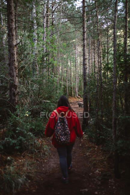 Вид сзади путешествующей женщины с рюкзаком, идущей по дорожке в отдаленном зеленом костюме — стоковое фото