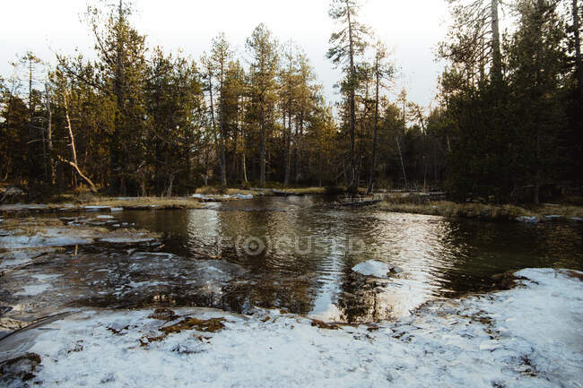 Beautiful River near forest — Stock Photo