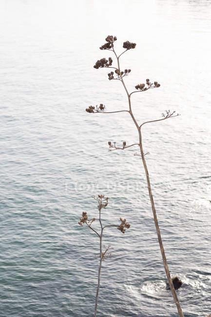 Безгорні дерева, що ростуть проти синього моря — стокове фото