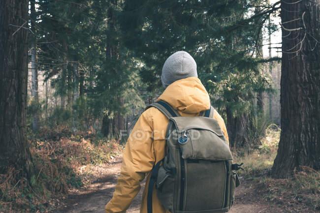 Unrecognizable traveler in conifer forest — Stock Photo