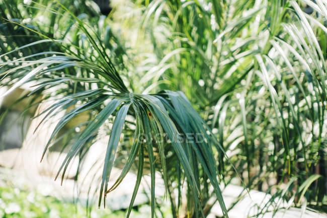 Primo piano delle foglie di palma in una giornata di sole — Foto stock