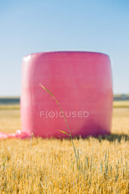 Зерновой тюк, завернутый с розовым пластиком, кампания против рака молочной железы — стоковое фото
