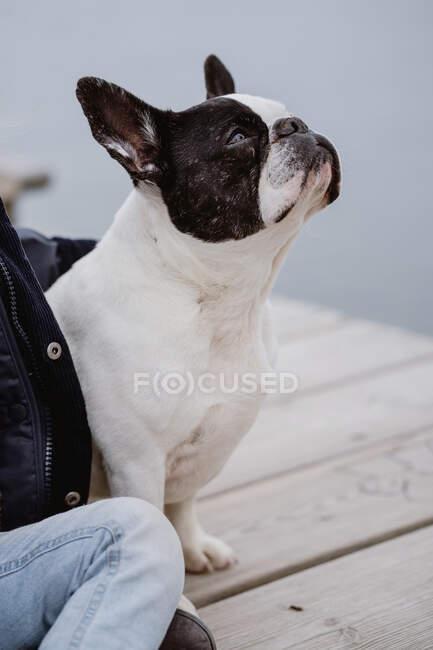 Anonima bambina con Bulldog francese seduta sul molo vicino al mare in una giornata opaca e nuvolosa — Foto stock