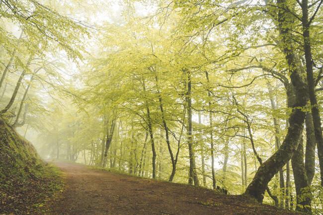 Прекрасна стежка на схилі пагорба біля зелених дерев у дивовижному лісі. — стокове фото