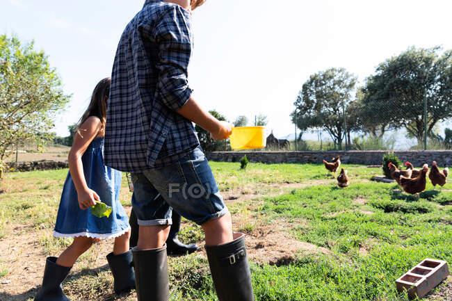 Bambini in estate indossano e wellingtons che alimentano galline da erba in fattoria in giornata di sole — Foto stock