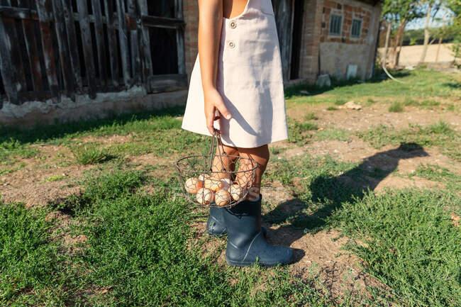 Chica adolescente anónima recogiendo huevos de pollo frescos del nido en el cobertizo mientras ayuda con las tareas en la granja - foto de stock