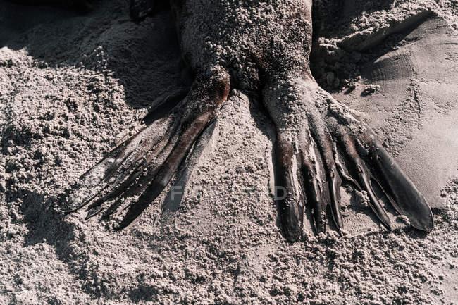 Урожай мокрые ласты печати на песчаном пляже в солнечный день — стоковое фото
