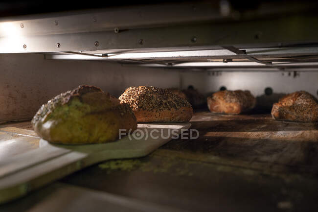 Taking out loaves of delicious bread with crispy crust of hot oven on big wooden scapula indoors — Stock Photo
