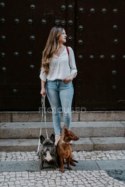 Модна сучасна жінка з бульдог і гончак стояв на тротуарі і дивиться геть — стокове фото