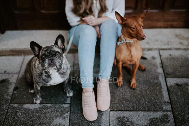 Femme avec le bouledogue et le chien sur le trottoir de rue et se penchant sur la porte en bois — Photo de stock