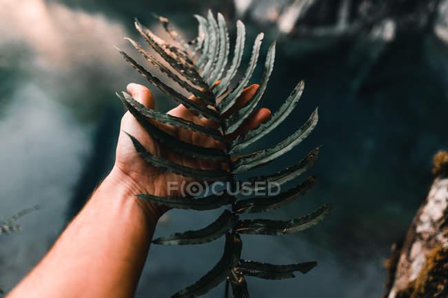 Verde scuro grande e strappato foglia esotica in mano sullo sfondo della vegetazione — Foto stock