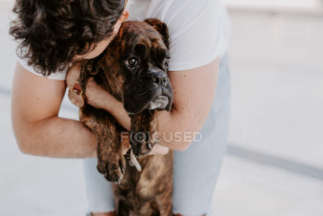 Adorable thoughtful boxer dog in hands of caring bonding owner — Stock Photo