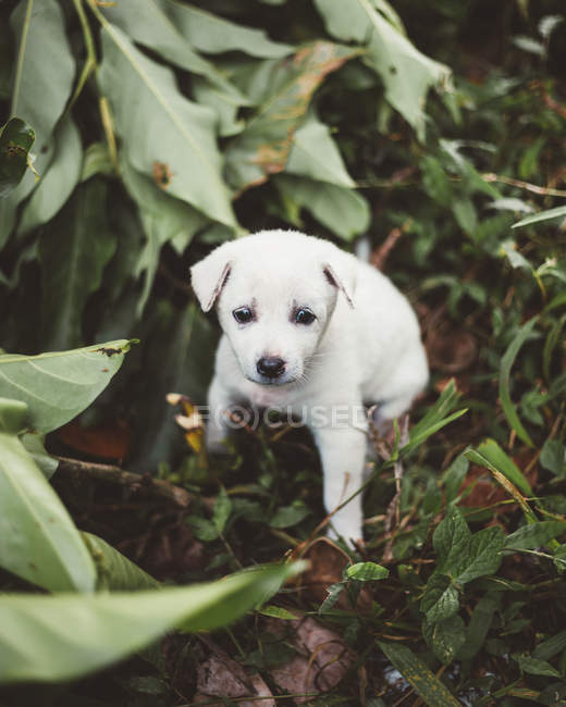 Adorable little puppy playing in nature — Stock Photo