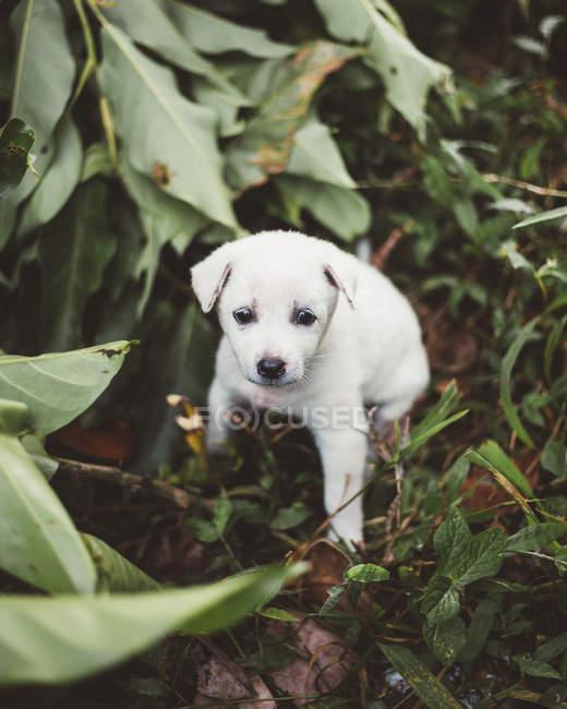 Adorable petit chiot jouant dans la nature — Photo de stock