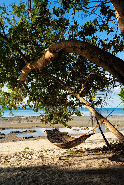 Wicker hammock hanging in shadow under bent tree on sandy seashore — Stock Photo