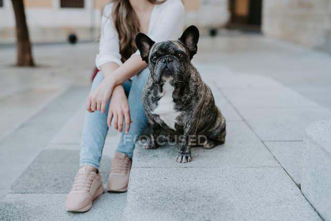 Бульдог сидячи на бетонній тротуарі на вулиці з жінкою власника — стокове фото
